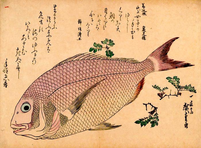 鯛の錦絵(『魚尽錦絵』歌川広重 画)