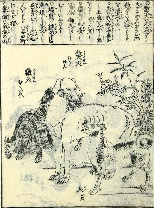 江戸時代の犬(『訓蒙図彙大成』より)