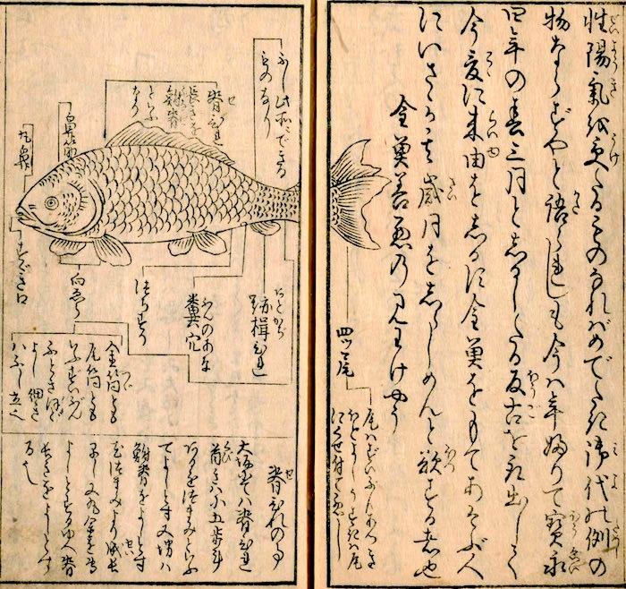 江戸時代の金魚ガイドブック『金魚養玩草』