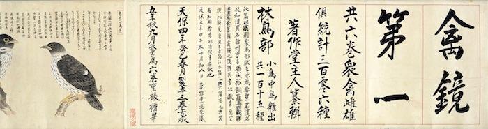 江戸時代の鳥図鑑『禽鏡』(曲亭馬琴 解説、渥美赫洲 画)