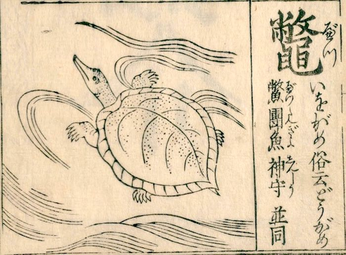 江戸時代にも食べられていたスッポン(『訓蒙図彙』より)
