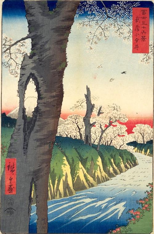 『冨士三十六景 武蔵小金井』(歌川広重 画)