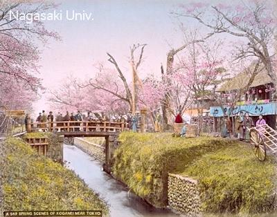 小金井でのお花見風景写真(明治時代 撮影)