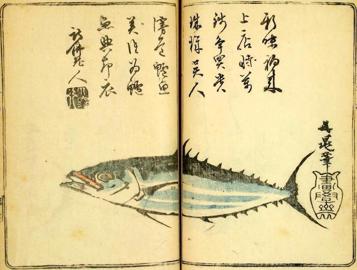初鰹は江戸時代の料理本『料理通』にも登場した