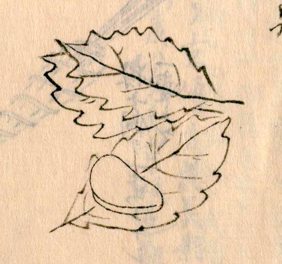 江戸時代の柏餅(『守貞謾稿』より)