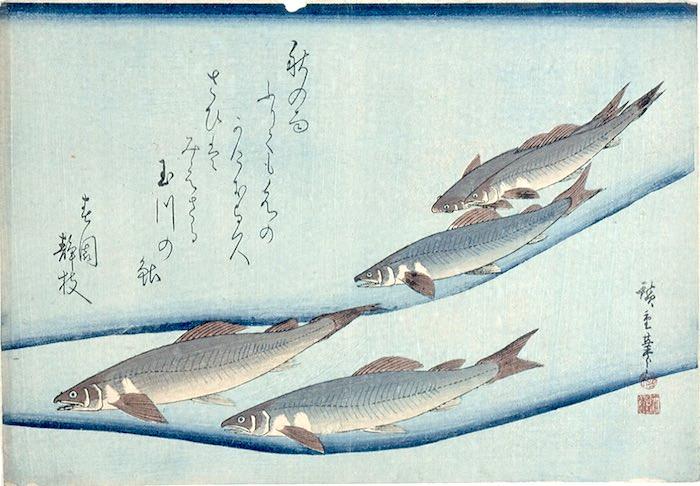 『魚づくし』より「鮎」(歌川広重 画)