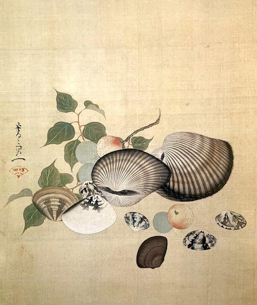 『貝図』(鈴木基一 画)