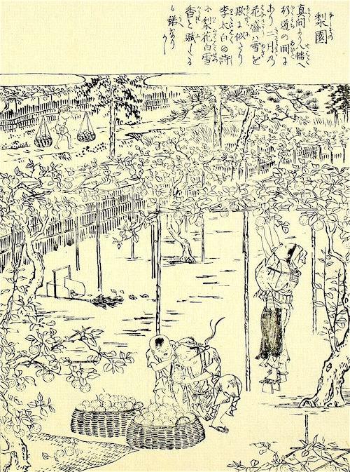 『江戸名所図会』(20)より(齋藤月岑 編/長谷川雪旦 画)