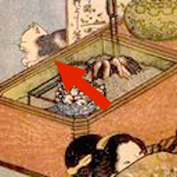 A cat appearing in shunga